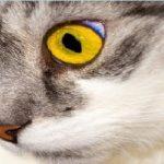 Škrabadla pro kočky, které milují pohyb
